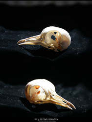 Bird Skulls Stock 11 by emothic-stock