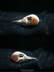 Bird Skulls Stock 13 by emothic-stock