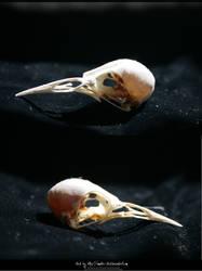 Bird Skulls Stock 14 by emothic-stock
