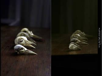 Bird Skulls Stock 16 by emothic-stock