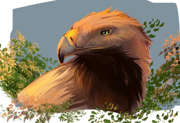 Eagle Study by theblacklotus92