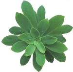 plant stock 14