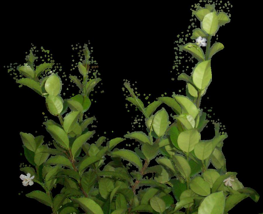 lateral foliage stock 1 by EveBlackwoodStock