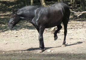 horse stock 3 by EveBlackwoodStock