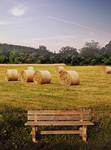 bench near a field by EveBlackwoodStock