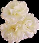 three roses by EveBlackwoodStock