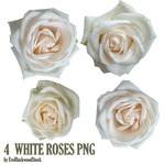 white roses PNG