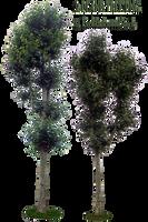 plant stock 21 by EveBlackwoodStock