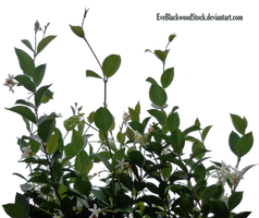 lateral foliage 6 by EveBlackwoodStock