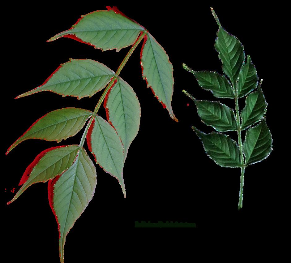 leaves stock by EveBlackwoodStock