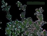 lateral foliage 8
