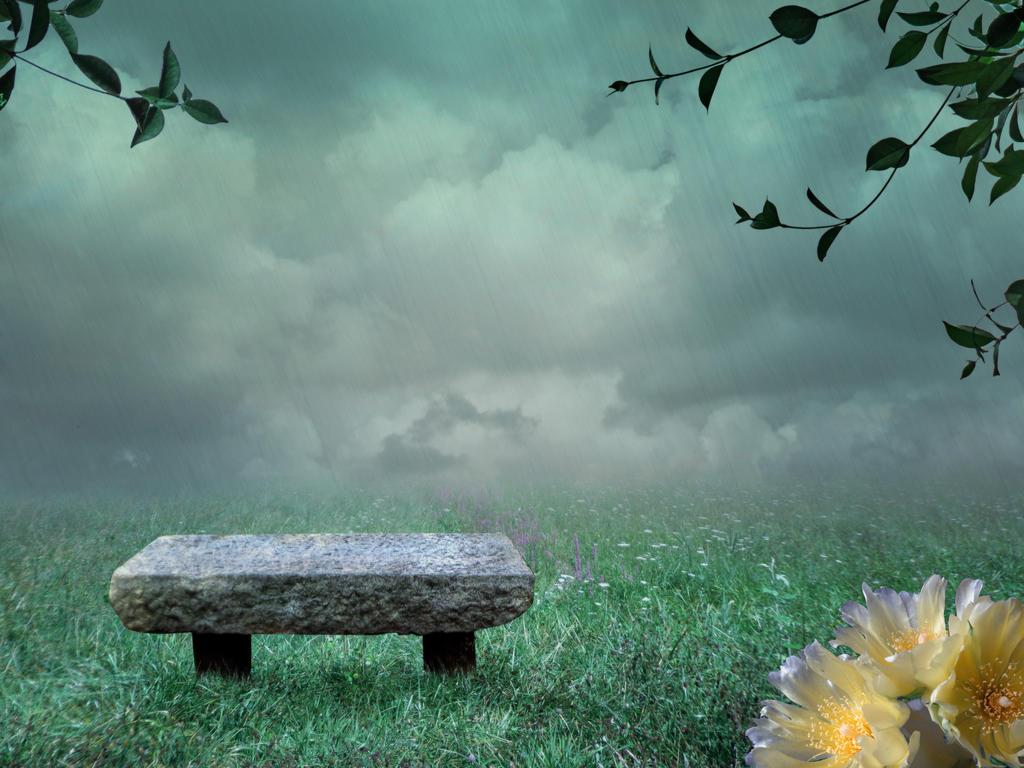 bench in the meadow by EveBlackwoodStock