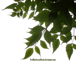 Foliage corner PNG