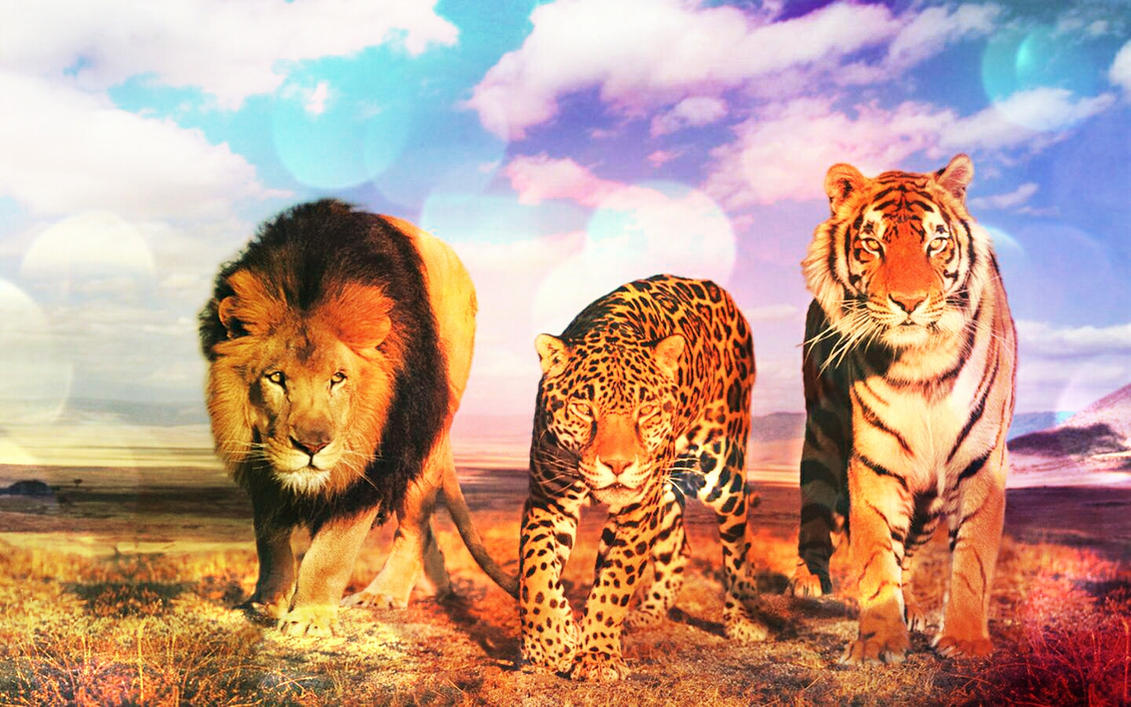 Group Of Lion Tiger And Leopard Wallpaper