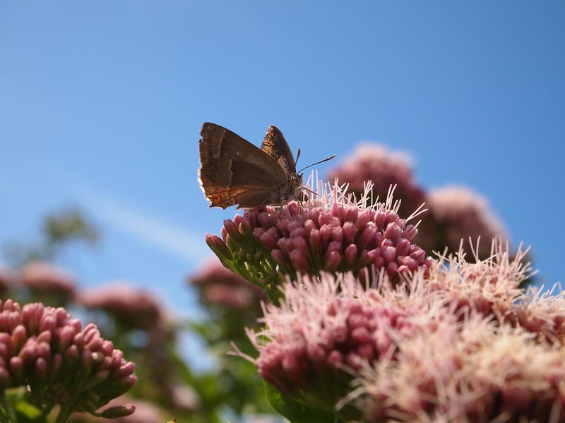 Butterfly-Sky by tanasha67