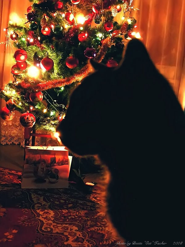 Merry Christmas, Mr Cat