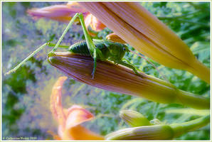 Dreamlike Grasshopper by CatherineNodet