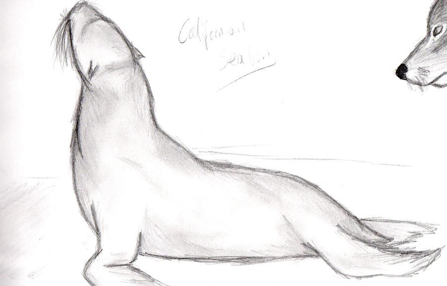 Californian Sea Lion By Djiacamo On DeviantART