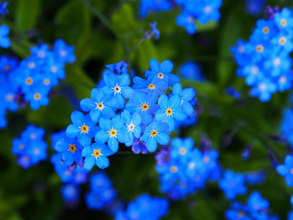 blue flowersgarden--gnome on deviantart