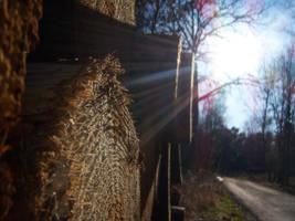 Wood by KaroG