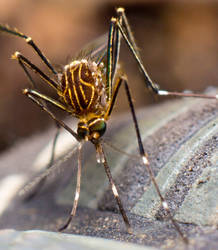 Mosquito 2 by HalfBloodPrince71