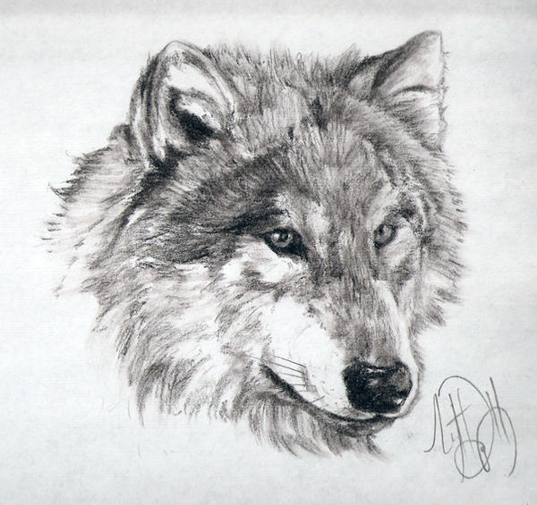 PENCIL DRAWIN ALINA On Pinterest Lion Sketch And