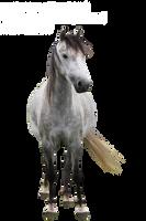 Grey horse precut by emilygita