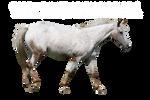 Appaloosa horse precut