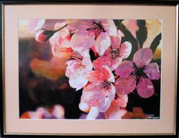 Sakura by MSamsonov
