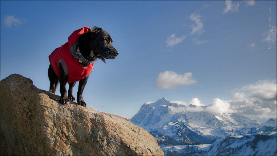 mountain pup by NWunseen