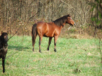 WILD HORSES IN MAY