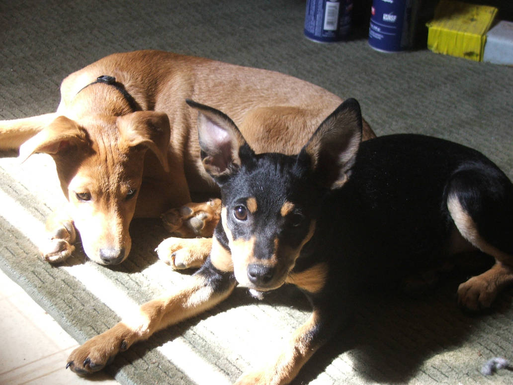 Puppies in sunlight