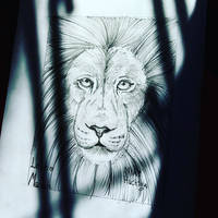 First time drawing real life lion
