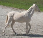 Equine Stock 10