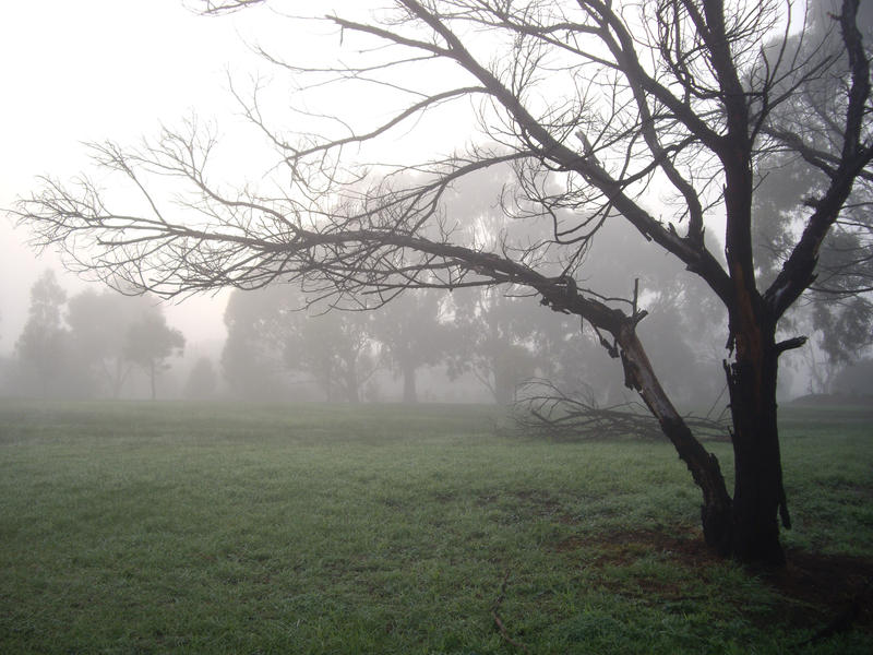 Foggy Stock 2 by lovehorses14