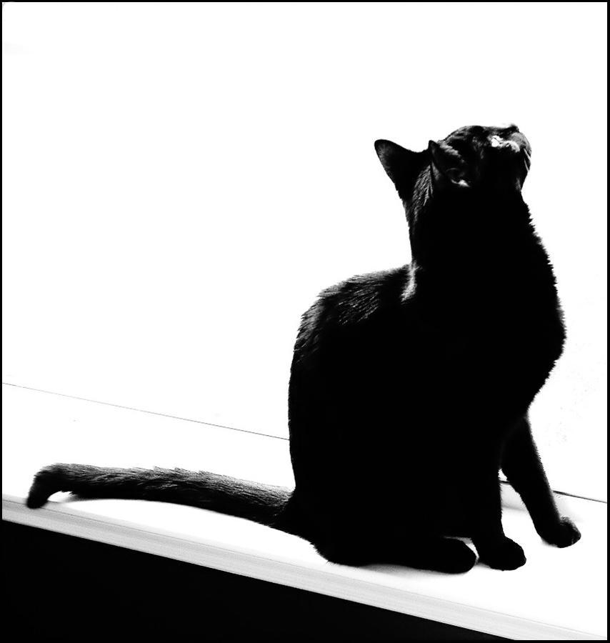 monochrome mimi by felinefetish