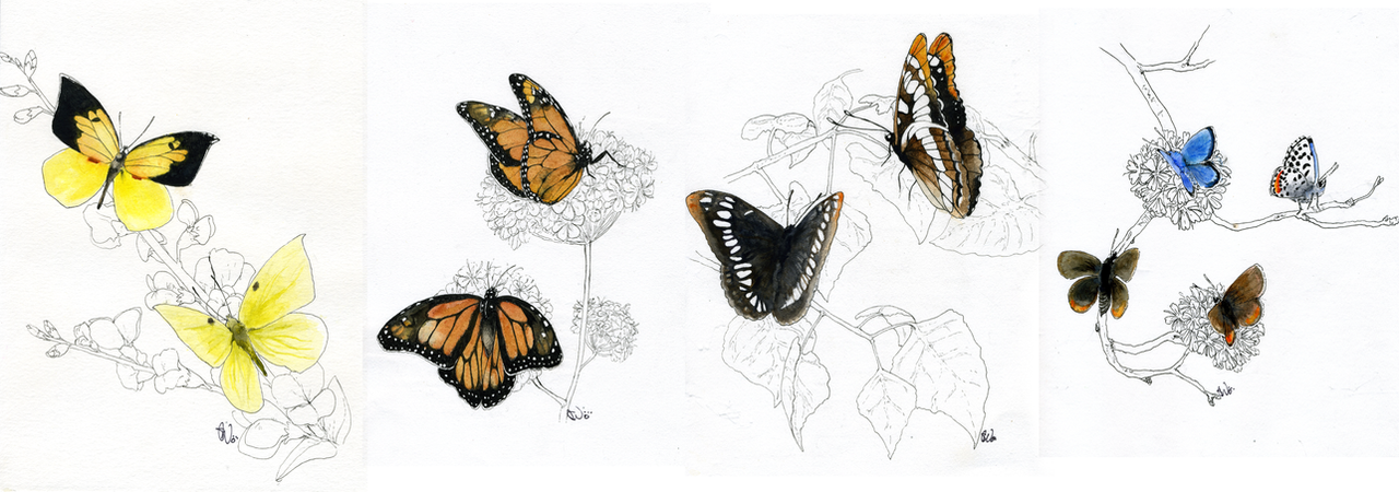 Butterfly net illustration