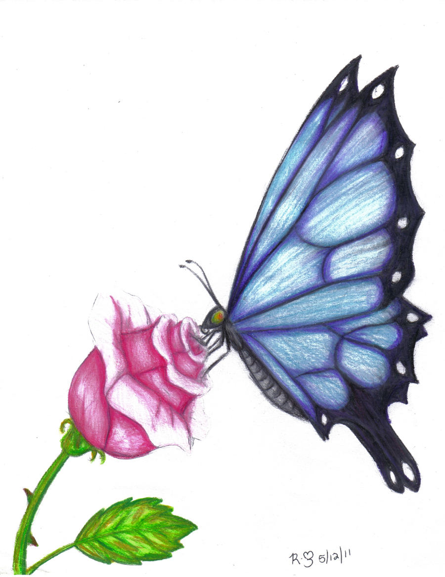 Butterfly and rose drawing - photo#7