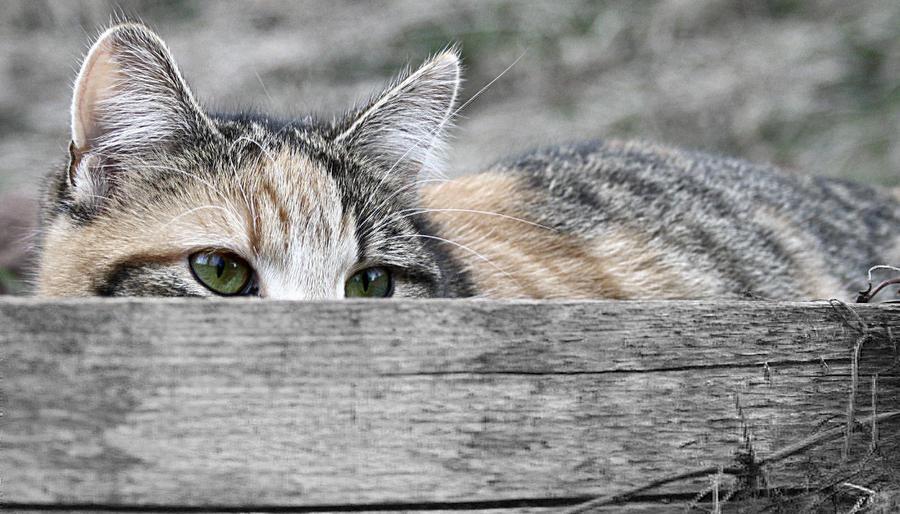 Stalking Kitteh by hutzimbl
