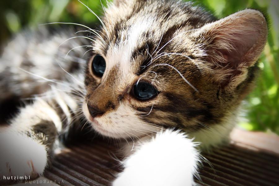 Pure cuteness by hutzimbl