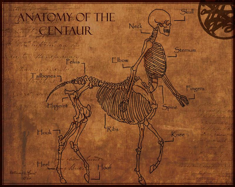 Anatomy of The Centaur by Shadowglove