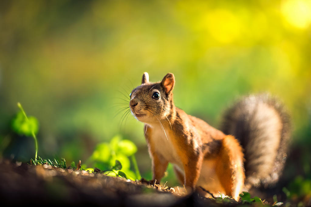 Little adventurer by Dekus