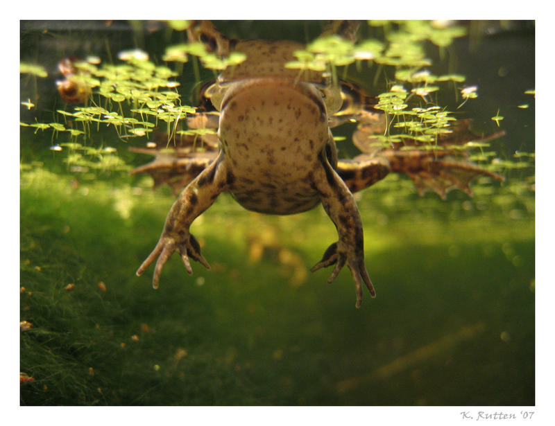 Frog from below by Dreamk8