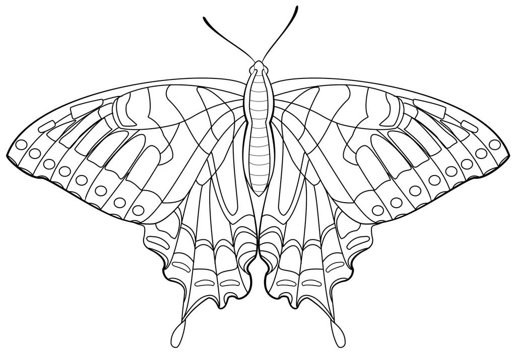 swallowtail butterfly coloring book pages - photo#10