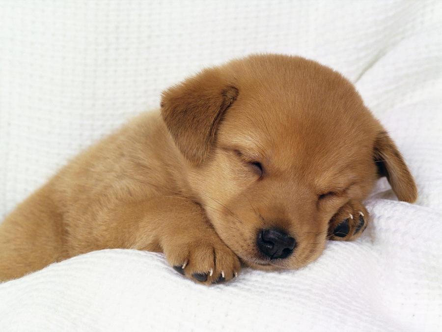 puppy by LJ6204