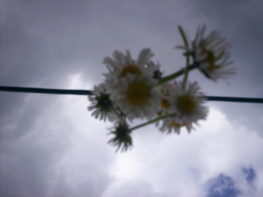Daisy chain 2 by Holsmetree