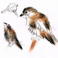 Projekt: animal sketches_birds by Araless