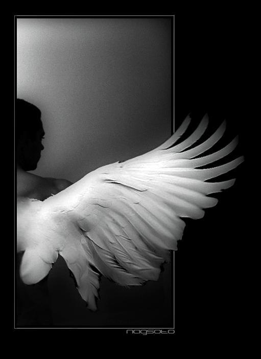 http://fc07.deviantart.net/fs11/i/2006/255/1/c/Angel_by_nagsoto.jpg