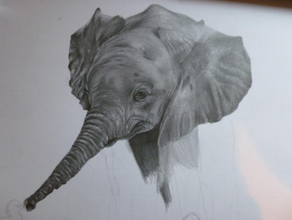 How To Draw A Realistic Baby Elephant Step By Step