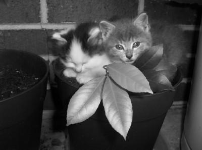 Pothead Kittens by Rhimey